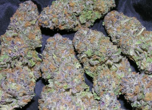 Acheter du cannabis Blueberry Kush en ligne