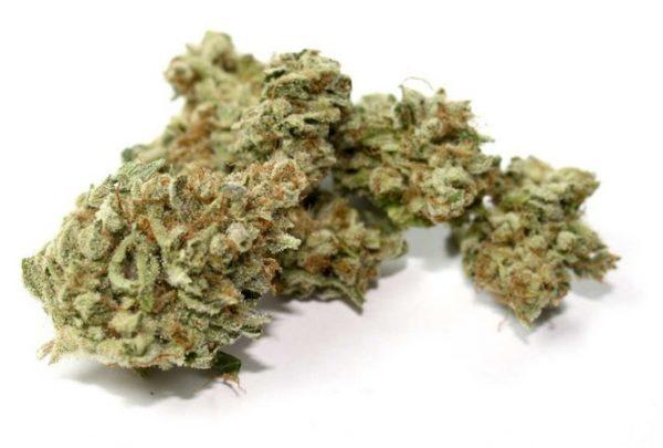 Achetez du cannabis 9 Pound Hammer en ligne